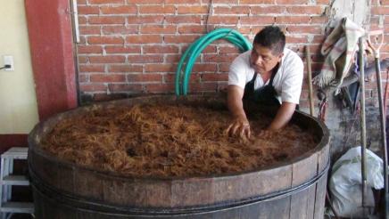 Making mezcal