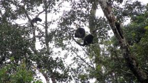 Monkeys! :)