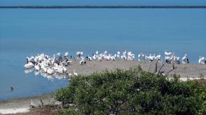 The island of the birds