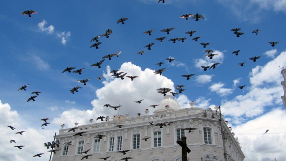 Lots of doves at the Plaza de San Francisco.