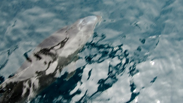 A dolphin!!! There were 3 of them swimming just in front of our boat!