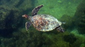 Beautiful turtle in the water!