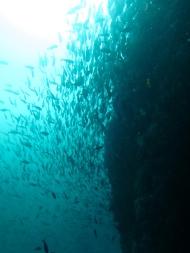 So many fishes. Amazing.