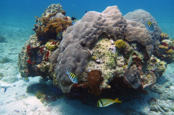 coral reefs in isla mujeres