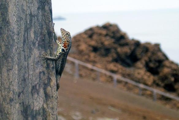 A small lizard :)