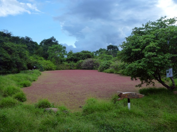 The red lagoon!! Some sort of plants growing there
