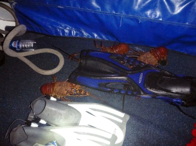 Some lobsters and our fins... :)