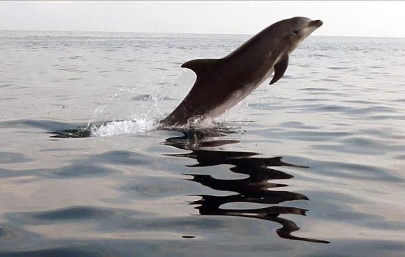 El delfin saltando!!!!