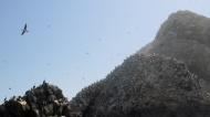 Birds and cliffs.