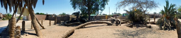 Panorama over Cachiches Palm tree with seven heads!
