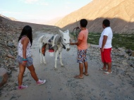On our way to the camping site, we found this donkey on the road!