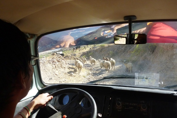 Haha. Some sheep  we found on the road!