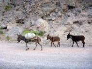 Three donkeys..