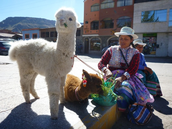 A woman and her two Alpacas, Chocolate and Blanca on the main square in Chivay