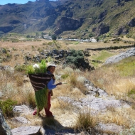 Out wandering in the fields of Colca