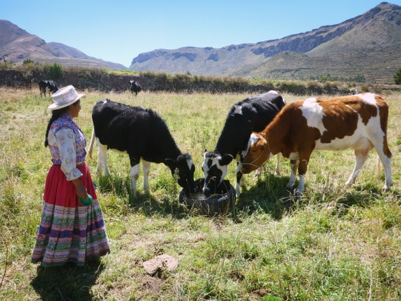 Josefina and her cows in their farm