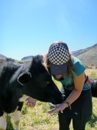 The cow licked me....