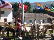 Some lamas and all the countries flags. The gay flag is not a gay flag - it's cuscos flag.