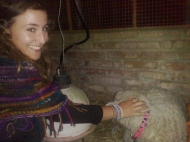 Saying hi to the sheep :)