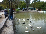 Some ducks at Parque San Martin