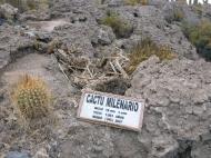 R.I.P Cactus