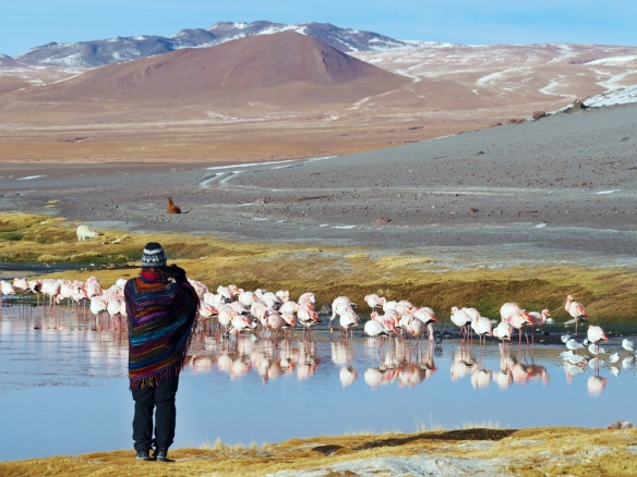 Me photographing some flamingos (david took this pic)