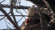 Hello bird.