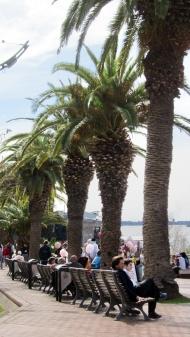 Love palmtrees!