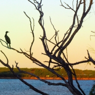 A bird chilling in the tree. Parana river behind.