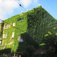 Lovely overgrown house. The green is good because it keeps the house warmer when its cold outside, and colder when it's hot outside.