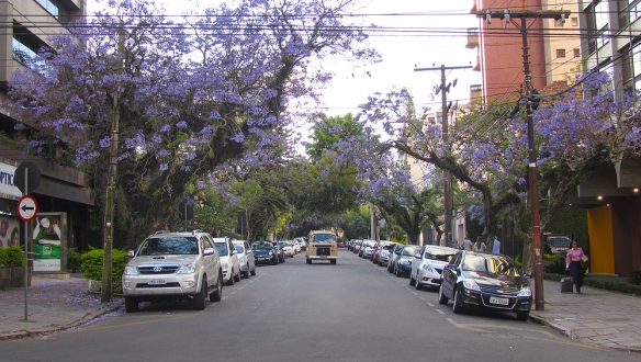 Love the purple trees, very common here in Porto Alegre.