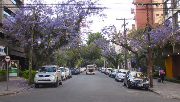 Love the purple trees, very common here in Porto Alegre.