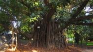 Cool tree!