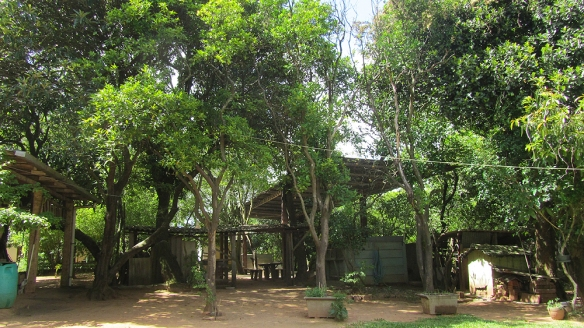 Rafas familys garden, filled with orange-, mango-, avocado-, jabuticaba-, Granada-, carambola- and nut-trees.