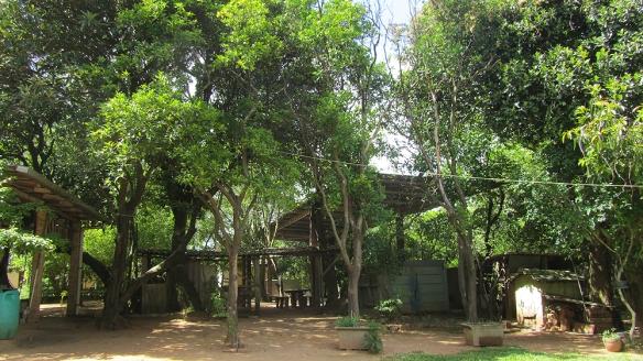 Rafas familys garden, filled with orange-, mango-, avocado-, jabuticaba-, Granada-, carambola- and nut-trees.