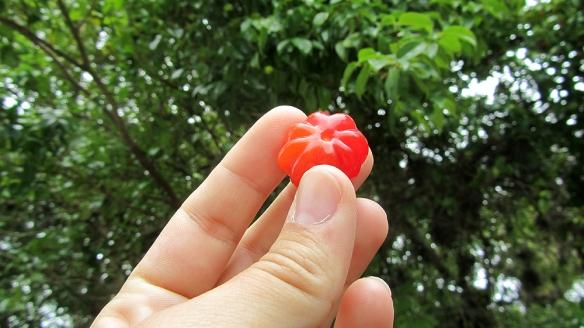 Pitanga fruit!