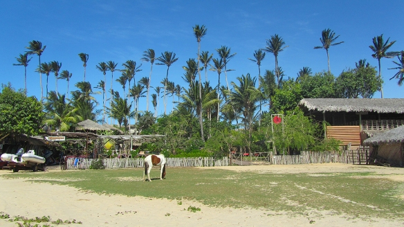 Wild cows and high palm trees.