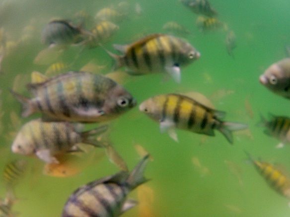 So many fishes, and they go so close to you!!