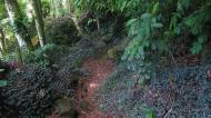 Trail in Ilha Grande