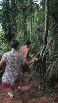 Walking in the rainforest
