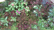 Flowers in Oasis Mundo