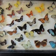 I love butterflies :) At the national museum of Mdina