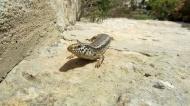 A lizard on the wall! Hehe