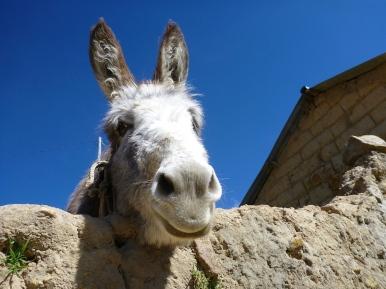 Hey donkey!
