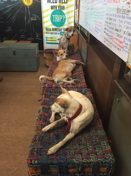 Cute hostel doggies! :)