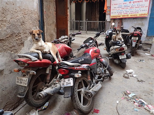 Two dogs chilling by their bikes ;)