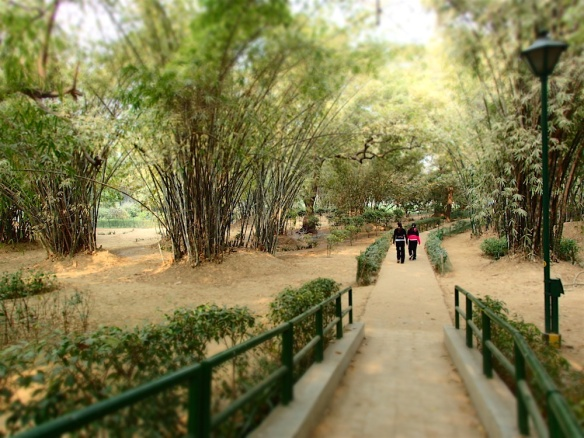 People on a walk in the lodi gardens