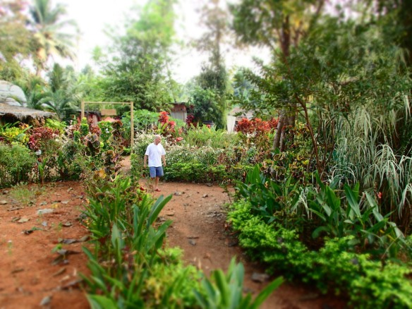 Scott taking a walk through the Ayurveda gardens