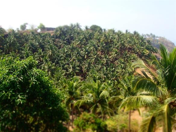 Soo many palmtrees!!