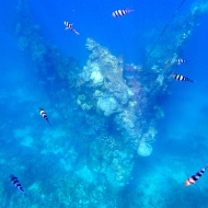The skeleton wreck, you can only see half of it, but it's cool that you can snorkel and see it :)